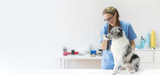 Corso assistente veterinario